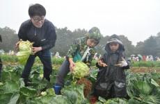 ダイコン、キャベツ…高原野菜を収穫!