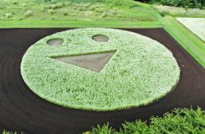 猪苗代に笑顔の花を 8月4日フラワーアート制作