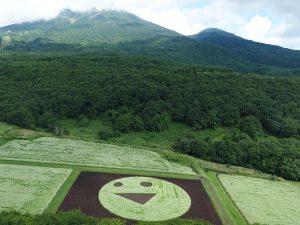 今年も磐梯山の麓にスマイルが咲きました♪