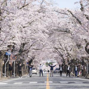 「今年も桜が咲いた富岡は、笑顔も満開です」カラフルとみおかプロジェクト