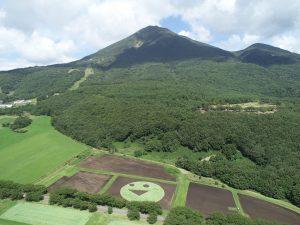 磐梯山のふもとにスマイルが咲きました